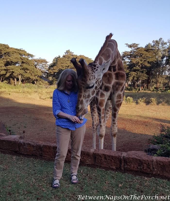 Rothschild Giraffes, Giraffe Manor, Kenya