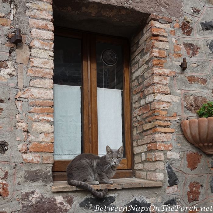 Cat in Window, Radicofani, Orcia Valley, Italy