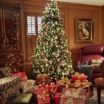 A Christmas Tree at Last
