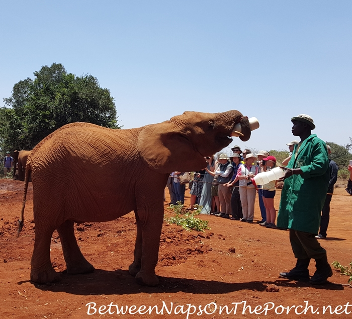 Baby Elephants Project, The David Sheldrick Wildlife Trust