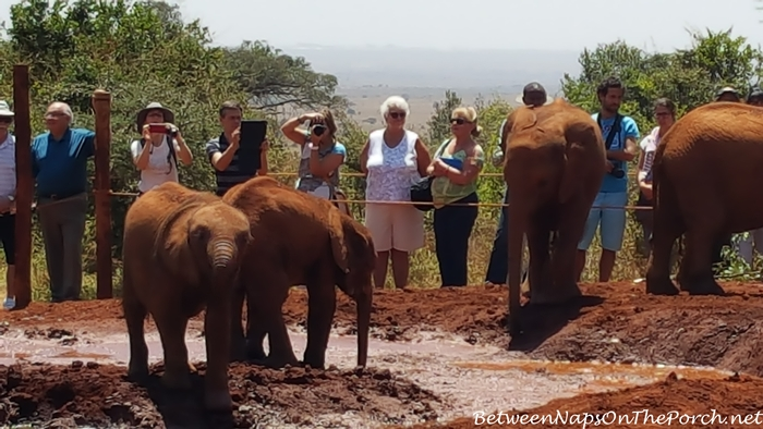 Baby Elephants,The David Sheldrick Wildlife Trust