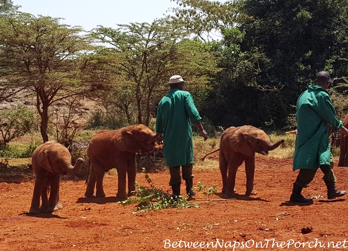 Elephants at The David Sheldrick Wildlife Trust