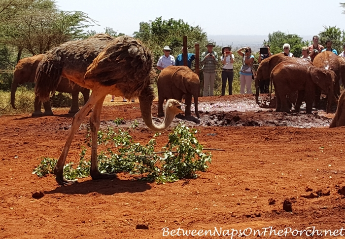 The David Sheldrick Elephant Project
