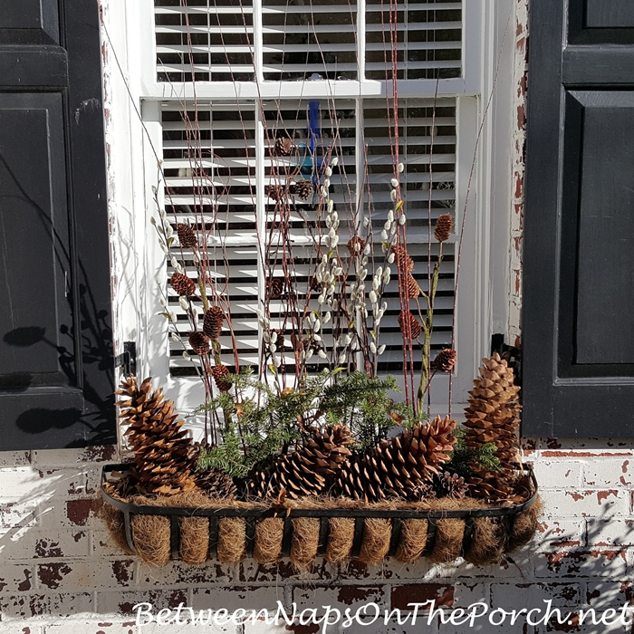 Window Box Filled for Winter