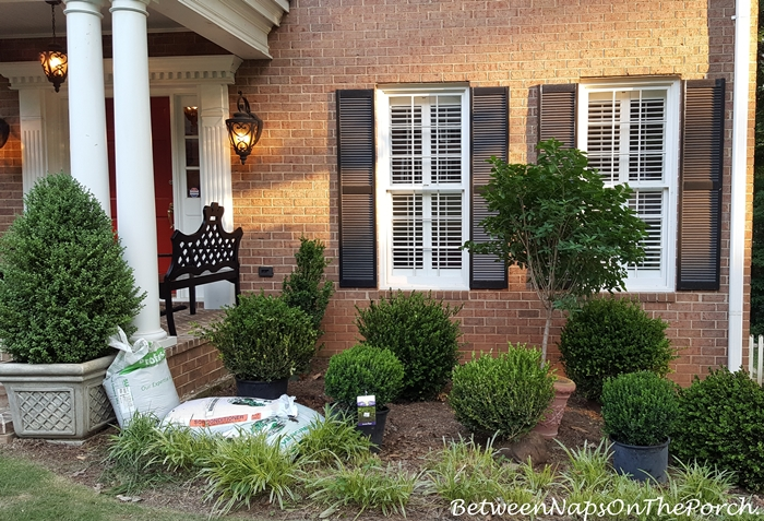 Landscape with Boxwoods Shrubs for an Evergreen Landscape