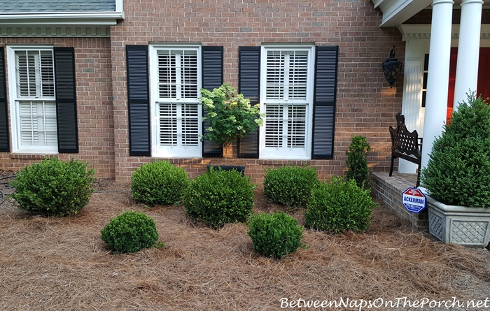 Landscaping with Boxwood Shrubs