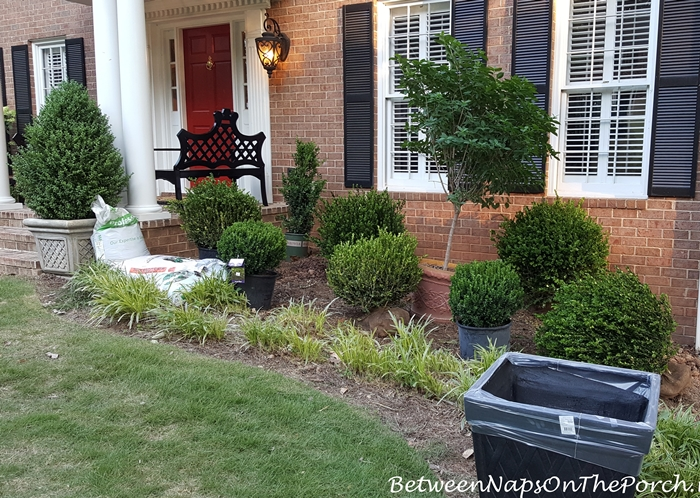 Landscaping with Green Beauty & Baby Gem Boxwood and Limelight Hydrangeas