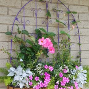 Plant Wall Hanger in Window Box Style