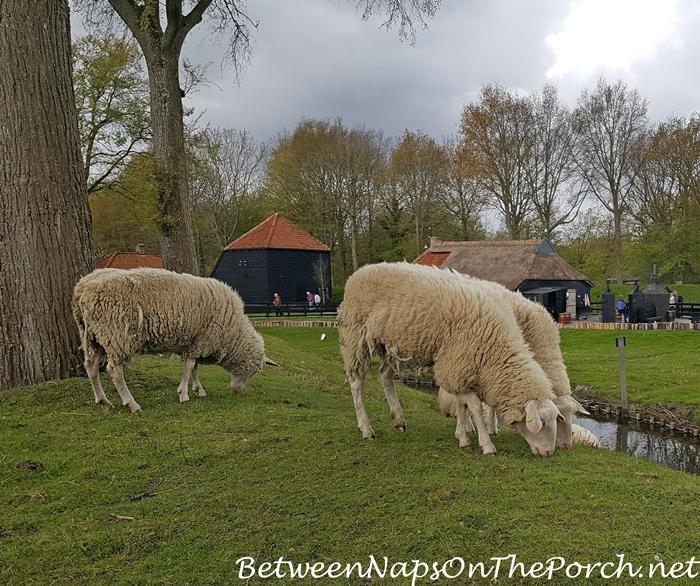 Zuiderzee Museum, Sheep Grazing
