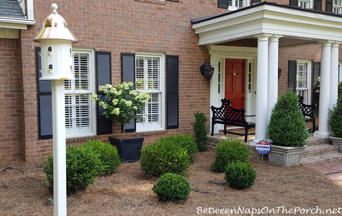 Boxwood for a Traditional, Classic Landscape