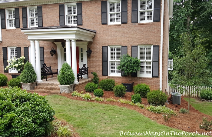 Front Yard Makeover With Boxwood Shrubs