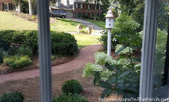 View of Garden Through Window