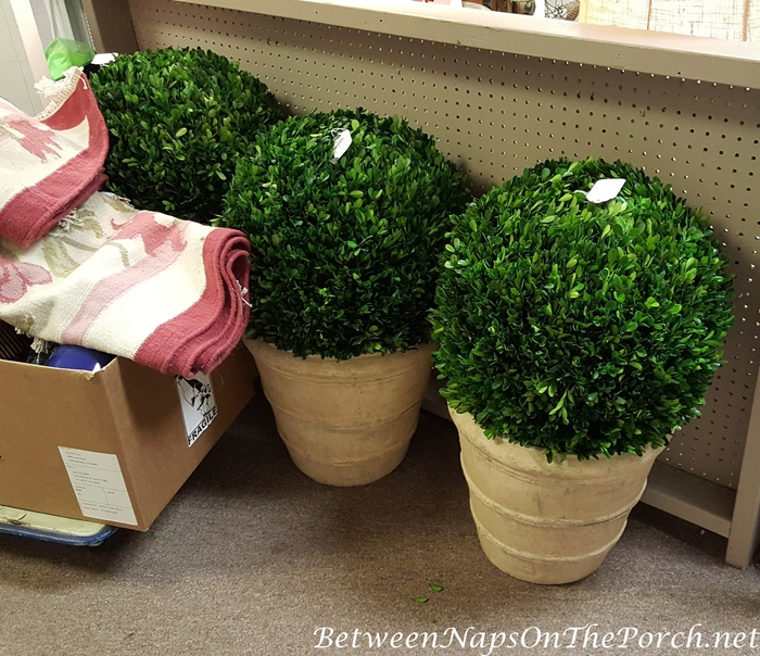 Large Preserved Boxwood Planters