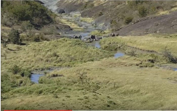 Elephants in the Valley at Mahali Mzuri