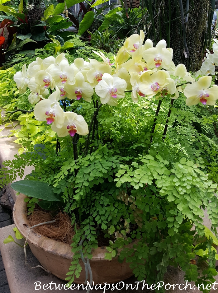 atlanta-botanical-garden-chihuly-in-the-garden-12