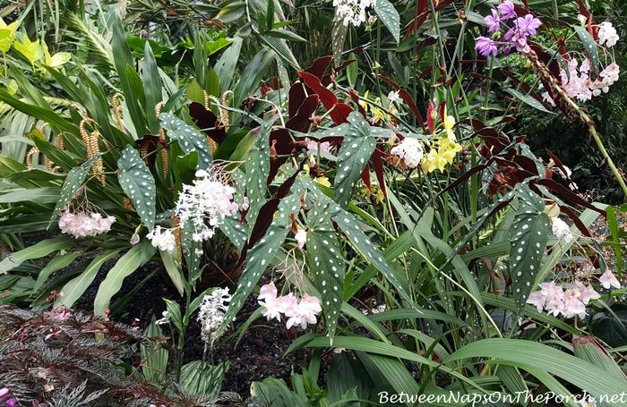 atlanta-botanical-garden-chihuly-in-the-garden-13