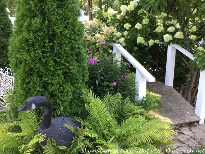 garden-hydrangeas-bridge-ferns