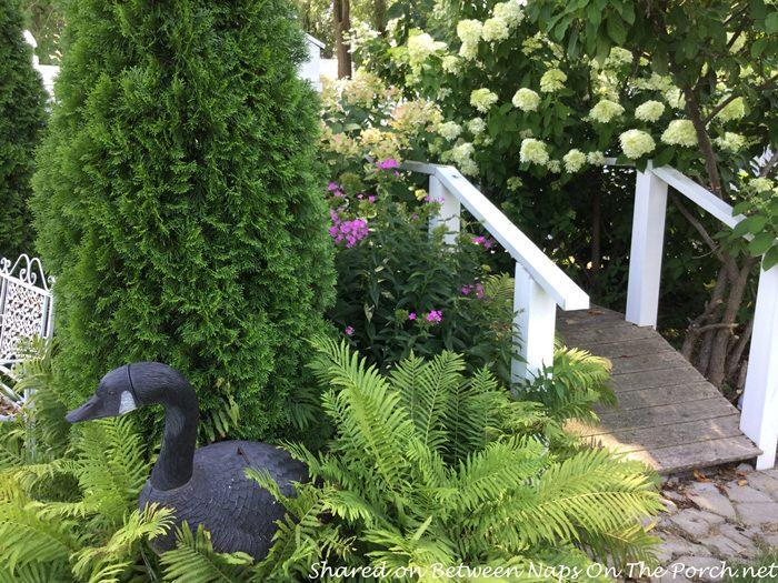 garden-hydrangeas-bridge-ferns