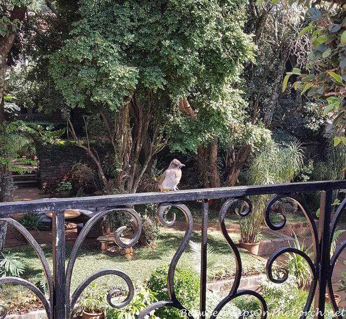 giraffe-manor-birdie-visit