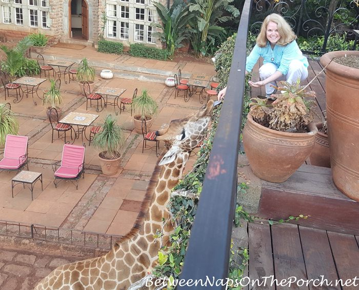 giraffe-manor-feeding-giraffe-from-daisy-room-balcony_wm