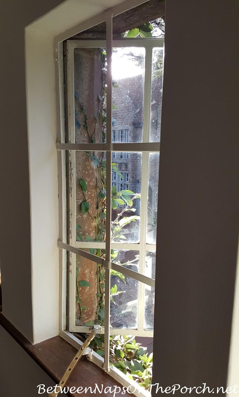giraffe-manor-vines-growing-just-outside-window-daisy-room