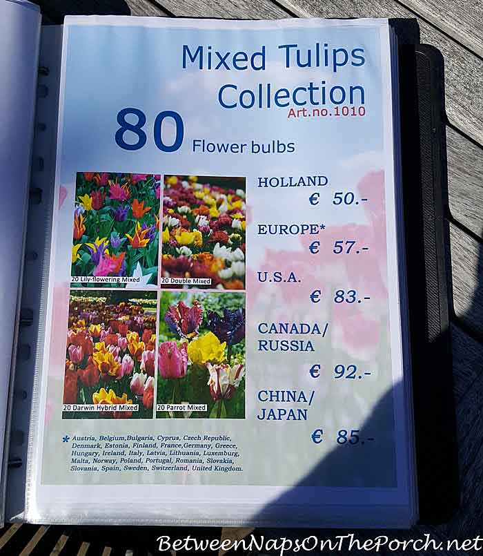 mixed-tulip-bulbs-from-keukenhof-gardens-holland