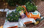 Planting Tulips and Violas & A Little Christmas Table Shopping