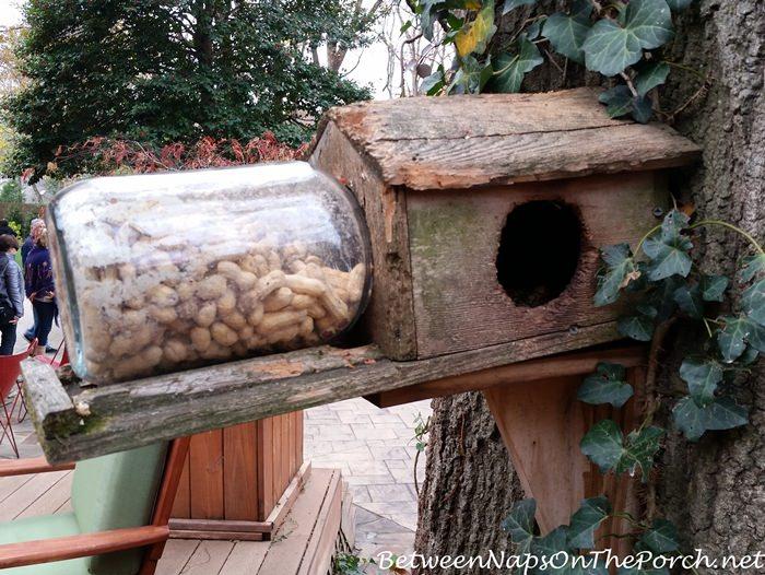 diy-squirrel-peanut-feeder