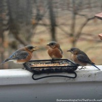 "Table For Three: Bluebirds ""Doing Lunch"""