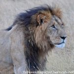 When You're On Safari, It's All About the Animals: Part I