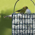 Washing Benches at O'Dark:30, Birdie Nesting, Hat Storage and Garden Updates