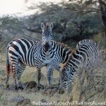 When You're on Safari, It's All About the Animals: Part II
