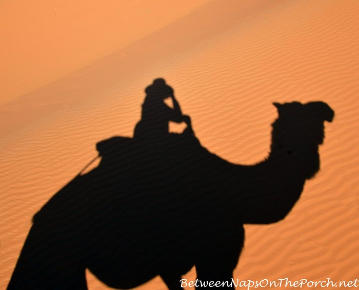 Camel Ride in Sahara Desert
