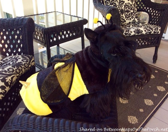 Cute Bee Costume for Dog