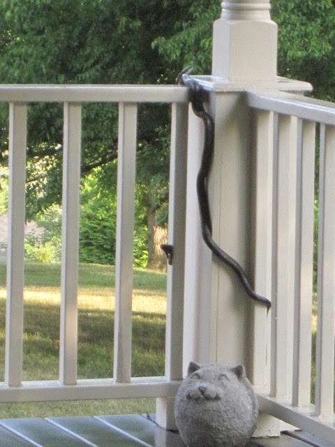 Black Snake on Porch