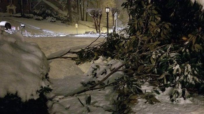 Magnolia Tree Damaged in Georgia Snowstorm, December 8, 2017