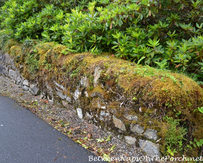 Moss-Covered Wall, Ballynahinch Castle, Galway Ireland