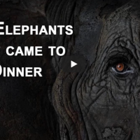 The Elephants Who Came To Dinner