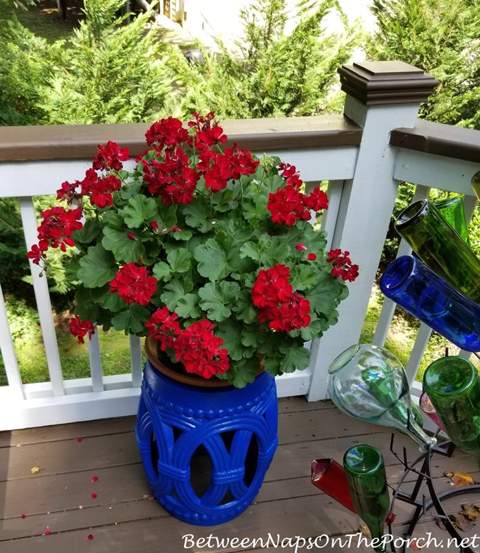 Blue Garden Stool with Red Geranium