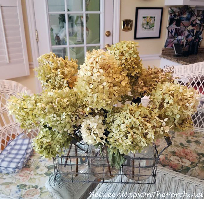Drying Limelight Hydrangeas at the end of summer