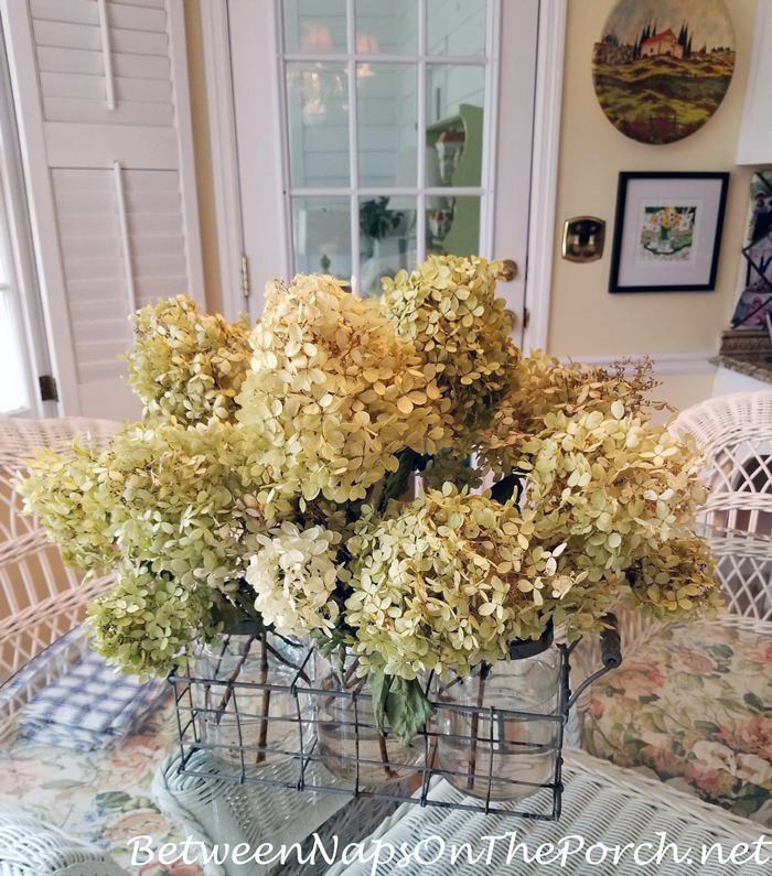 How to dry Limelight Hydrangeas Blooms