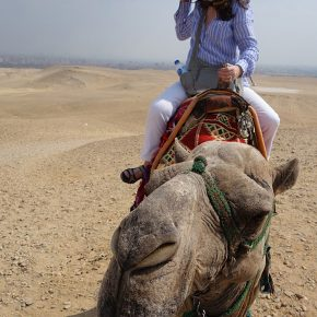 Camel Riding in Giza, Egypt, 2018