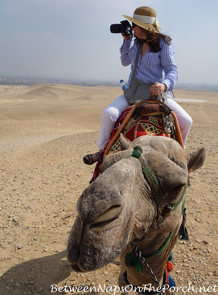 Camel Riding in Giza, Egypt, 2018