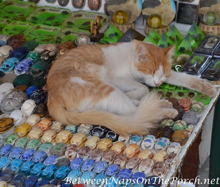 Market Kitty, Giza, Egypt