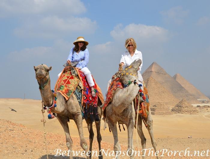 Silly Camel, Giza Plateau