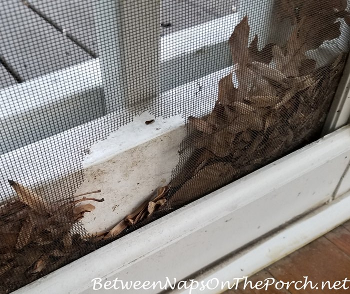 Mouse damage to screening on porch