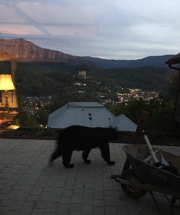 Bear on Deck
