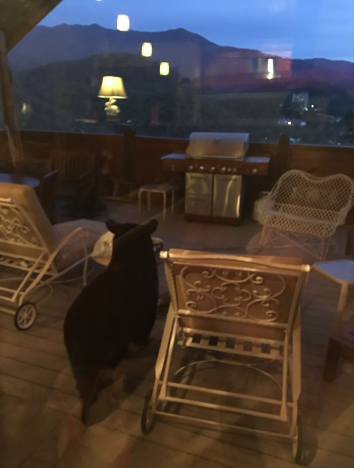 Bear enjoying the view from Tennessee Home Deck