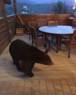 An Uninvited Dinner Guest, AKA The Bear Who Came to Dinner
