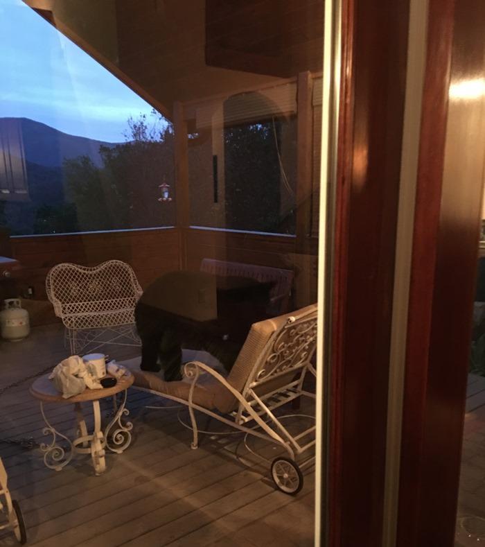 Bear enjoying deck furniture